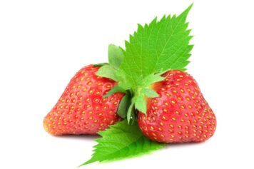 strawberry for dogs