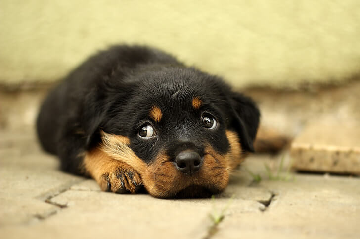 separation anxiety and depression in dogs