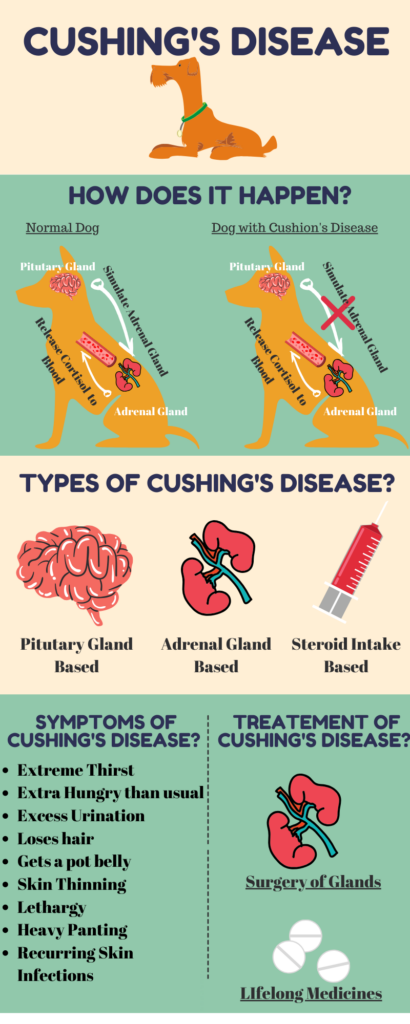 Cushing's Disease - How it happens, causes and treatment