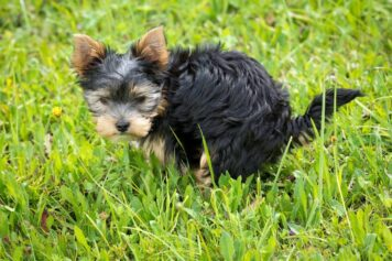house train a puppy with positive reinforcement
