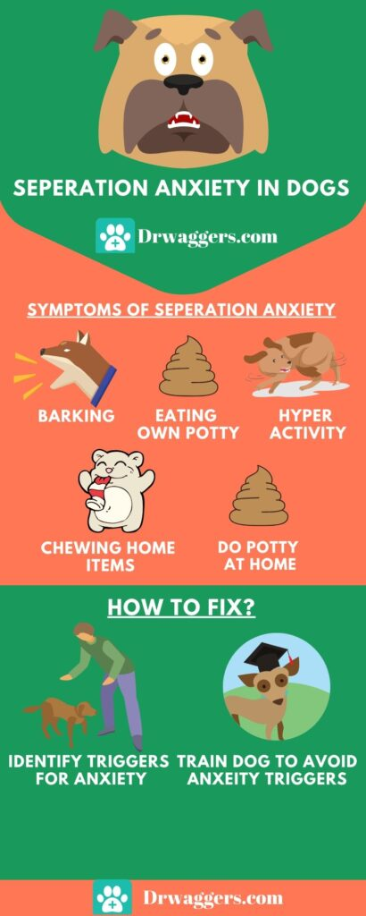 seperation anxiety in dogs